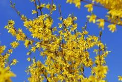 De lentebloemen Royalty-vrije Stock Foto's