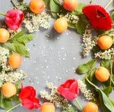 De lentebloemen, abrikozen op een concrete achtergrond Royalty-vrije Stock Fotografie