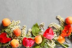 De lentebloemen, abrikozen op een concrete achtergrond Royalty-vrije Stock Afbeelding