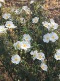 De lentebloemen in andalusia Royalty-vrije Stock Foto