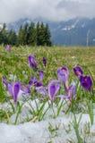 De lentebloemen in bergen royalty-vrije stock fotografie