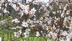 De lentebloemen bij zonnige dag stock footage