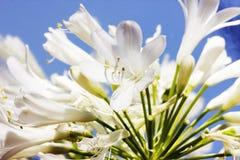 De lentebloemen - bloemen natuurlijke de lenteachtergrond met bloemen Royalty-vrije Stock Foto