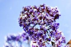 De lentebloemen - bloemen natuurlijke de lenteachtergrond met bloemen Stock Fotografie