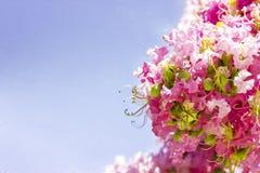 De lentebloemen - bloemen natuurlijke de lenteachtergrond met bloemen Stock Foto's