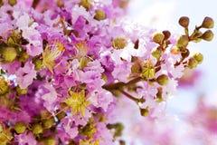 De lentebloemen - bloemen natuurlijke de lenteachtergrond met bloemen Royalty-vrije Stock Foto's