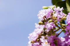 De lentebloemen - bloemen natuurlijke de lenteachtergrond met bloemen Stock Foto