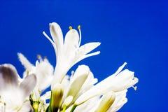 De lentebloemen - bloemen natuurlijke de lenteachtergrond met bloemen Stock Afbeeldingen