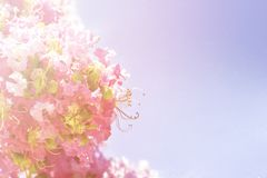 De lentebloemen - bloemen natuurlijke de lenteachtergrond met bloemen Royalty-vrije Stock Fotografie