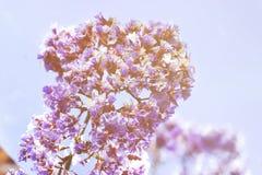 De lentebloemen - bloemen natuurlijke de lenteachtergrond met bloemen Royalty-vrije Stock Afbeeldingen
