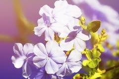 De lentebloemen - bloemen natuurlijke de lenteachtergrond met bloemen Nadruk bij de de lentebloemen De mening van de de lenteaard Royalty-vrije Stock Fotografie