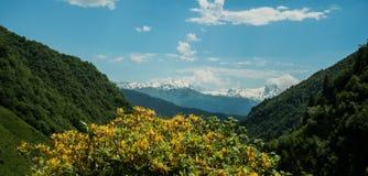 De lentebloemen in de berg Stock Afbeeldingen
