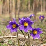 De lentebloemen in de bosopen plek Royalty-vrije Stock Fotografie