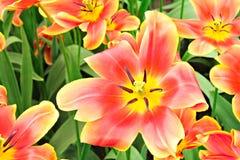 De lentebloemen in de tuin royalty-vrije stock foto's