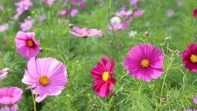De lentebloemen die in de tuin bloeien stock footage