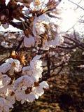 De lentebloemen die in het ochtendlicht tot bloei komen stock afbeeldingen