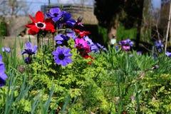 De lentebloemen, de eerste aan spruit na de lange winter stock foto's