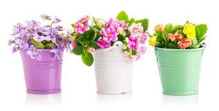 De lentebloemen in emmer stock fotografie