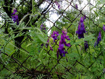 De lentebloemen en gras Royalty-vrije Stock Foto