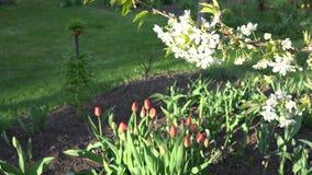 De lentebloemen en witte boomtak met bloei 4K stock footage