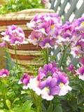 De lentebloemen in het hangen van mand kleine ruimtetuin Royalty-vrije Stock Afbeelding
