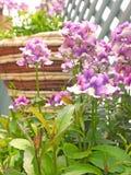 De lentebloemen in het hangen van mand kleine ruimtetuin Stock Fotografie
