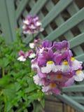 De lentebloemen in het hangen van mand kleine ruimtetuin stock foto's