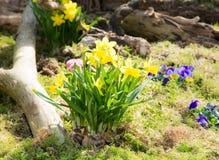 De lentebloemen in het park Stock Foto