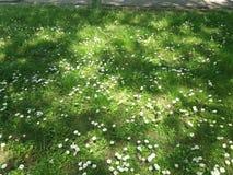 De lentebloemen in het park stock foto's