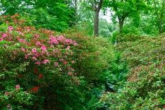 De lentebloemen in Isabella Plantation, Richmond Park Royalty-vrije Stock Afbeelding