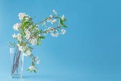 De lentebloemen - kersentak in glas Kaart met de lentebloem Royalty-vrije Stock Foto