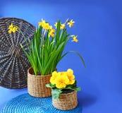 De lentebloemen in mand Stock Afbeeldingen