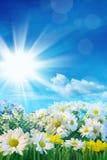 De lentebloemen met blauwe hemel Stock Afbeeldingen