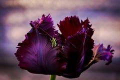 De lentebloemen met insect stock afbeelding