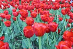 De lentebloemen in Moskou, jaar 2014 Stock Afbeeldingen
