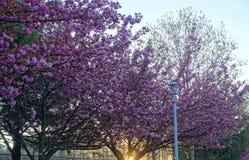 De lentebloemen op bomen Royalty-vrije Stock Fotografie