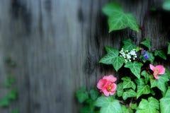 De lentebloemen op de boomklimop Stock Foto's
