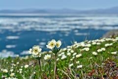 De lentebloemen op de oceaan. royalty-vrije stock fotografie