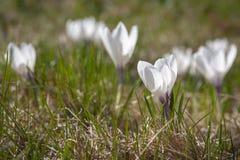 De lentebloemen op een geel gras op een zonnige dag stock foto