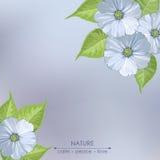 De lentebloemen op een grijze achtergrond Royalty-vrije Stock Foto's