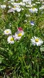 De lentebloemen op een opheldering Stock Foto's