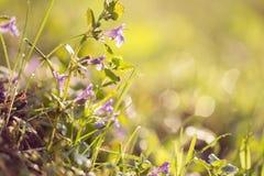 De lentebloemen op een opheldering royalty-vrije stock foto