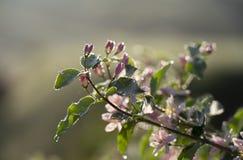 De lentebloemen op een wild Bush-close-up stock afbeelding