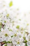 De lentebloemen op lichte achtergrond Stock Foto's