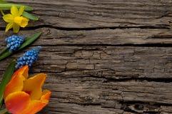 De lentebloemen op oud hout met copyspace Stock Foto's