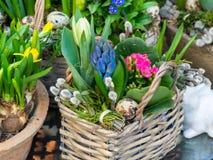 De lentebloemen op de straat worden verkocht die Bloemen in ceramische potten Pasen-markt op de straten van Wenen stock afbeeldingen