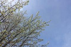 De lentebloemen op de struik Royalty-vrije Stock Fotografie