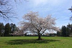 De lentebloemen op de struik Stock Foto