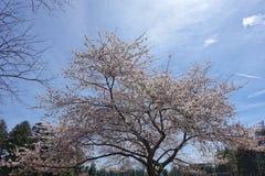 De lentebloemen op de struik Royalty-vrije Stock Afbeeldingen
