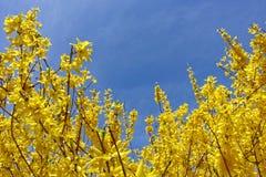 De lentebloemen op de struik Royalty-vrije Stock Foto's